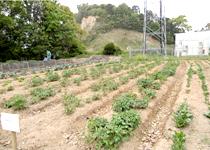 自社農園の再利用風景その1